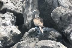 Ecuador & Galapagos 2008